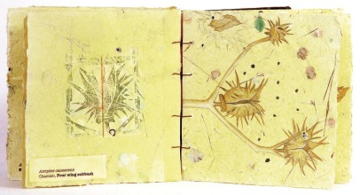 Seed Pod by Lynn Grimes