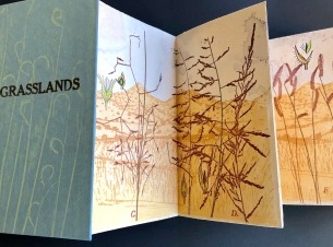 Grasslands by Lynn Grimes