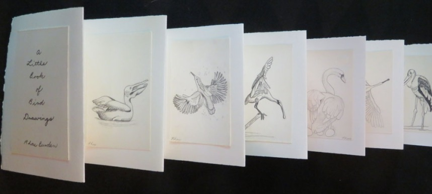 A Little Book of Bird Drawings by Rhea Burden